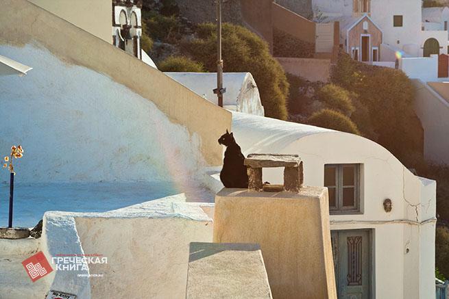 утренний кот на Санторини