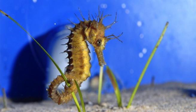 Критский аквариум. Среди обитателей глубин Средиземноморья