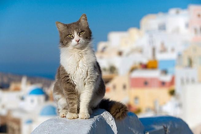 Греческие кошки – герои туристических фотографий
