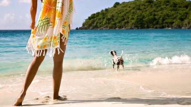 Собаки на пляжах Греции