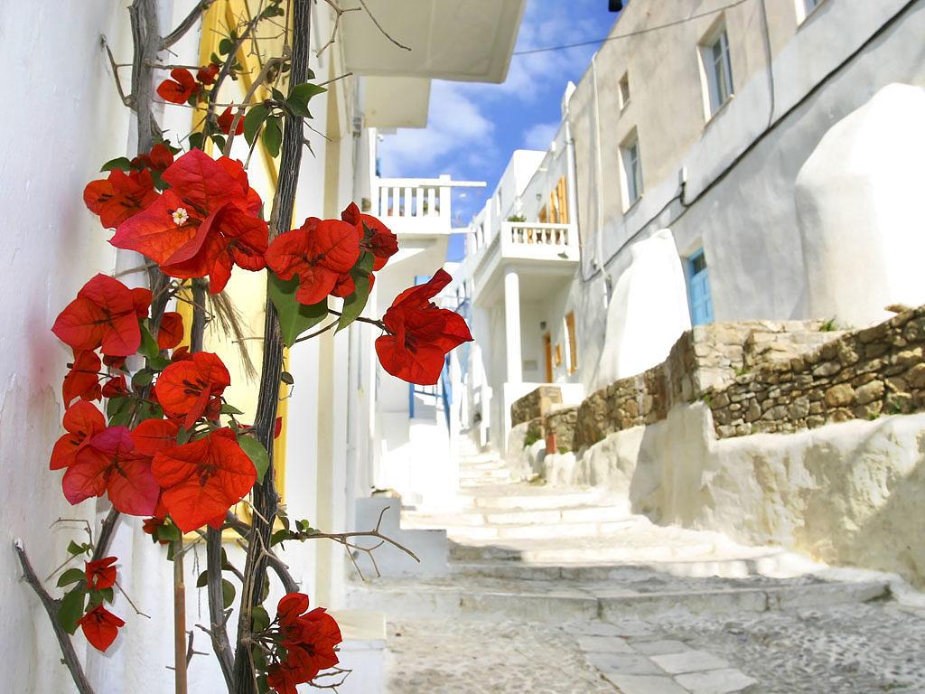 цветы на улочках Миконоса