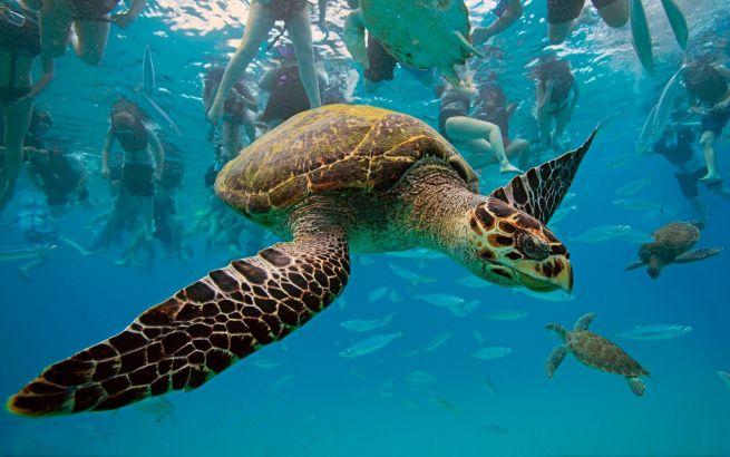 экскурсия «к черепахам»