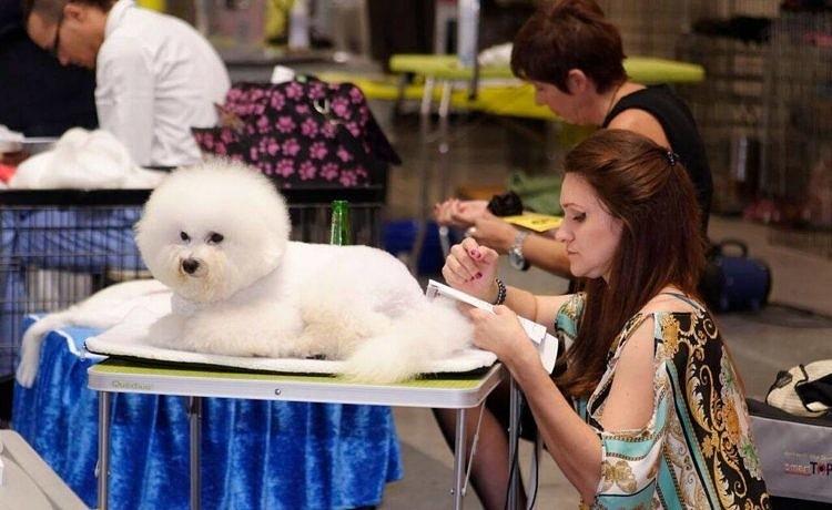В Афинах готовятся к очередному Фестивалю собак