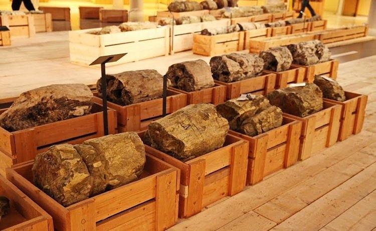 В Афины привезли фрагменты Окаменелого леса с Лесбоса
