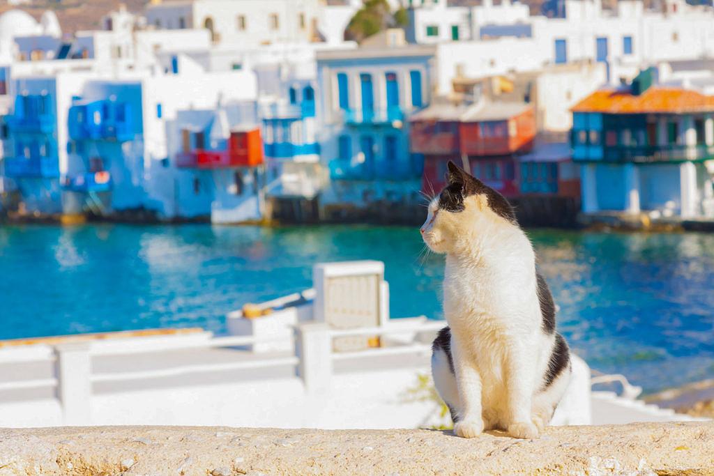 греческие коты и кошки