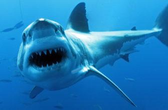 акулы в Греции