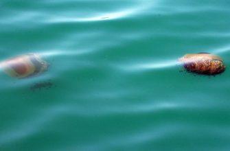 Узнайте, есть ли на вашем пляже медузы